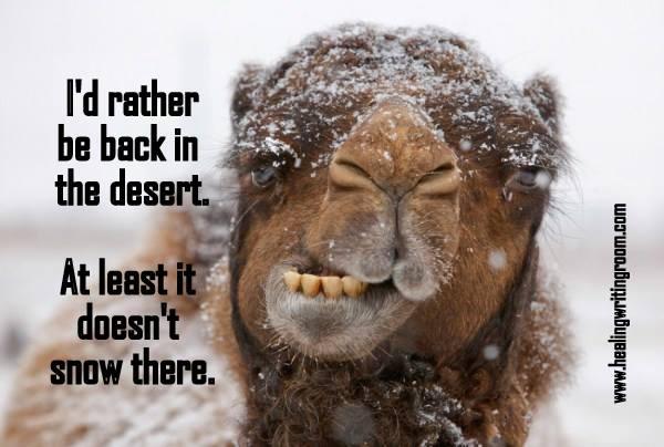 camel snow