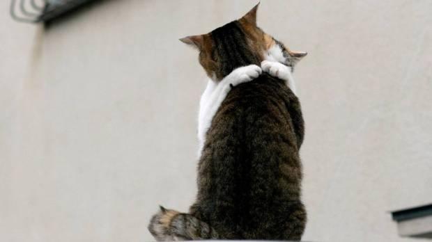 http://stuffpoint.com/cats/image/66707/hug-me-cats-wallpaper/