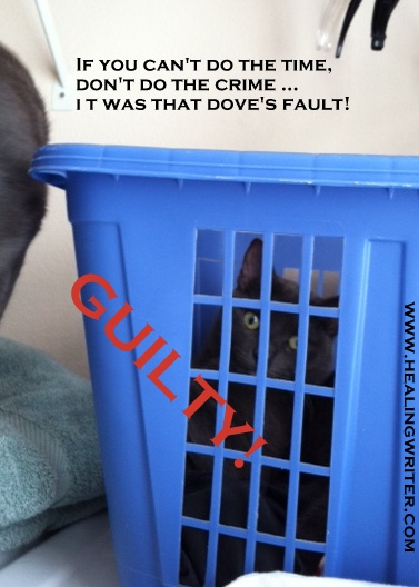 Cat prison Guilty