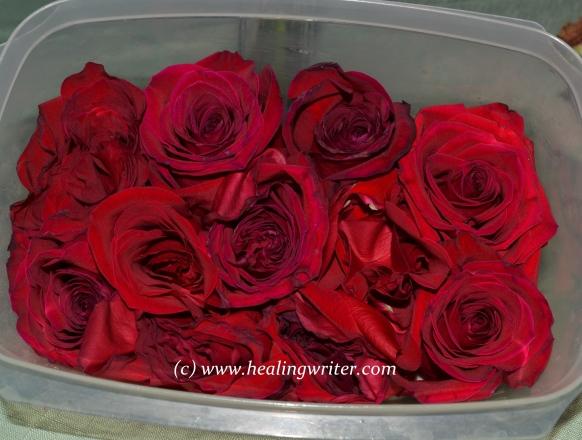dead rose blossoms