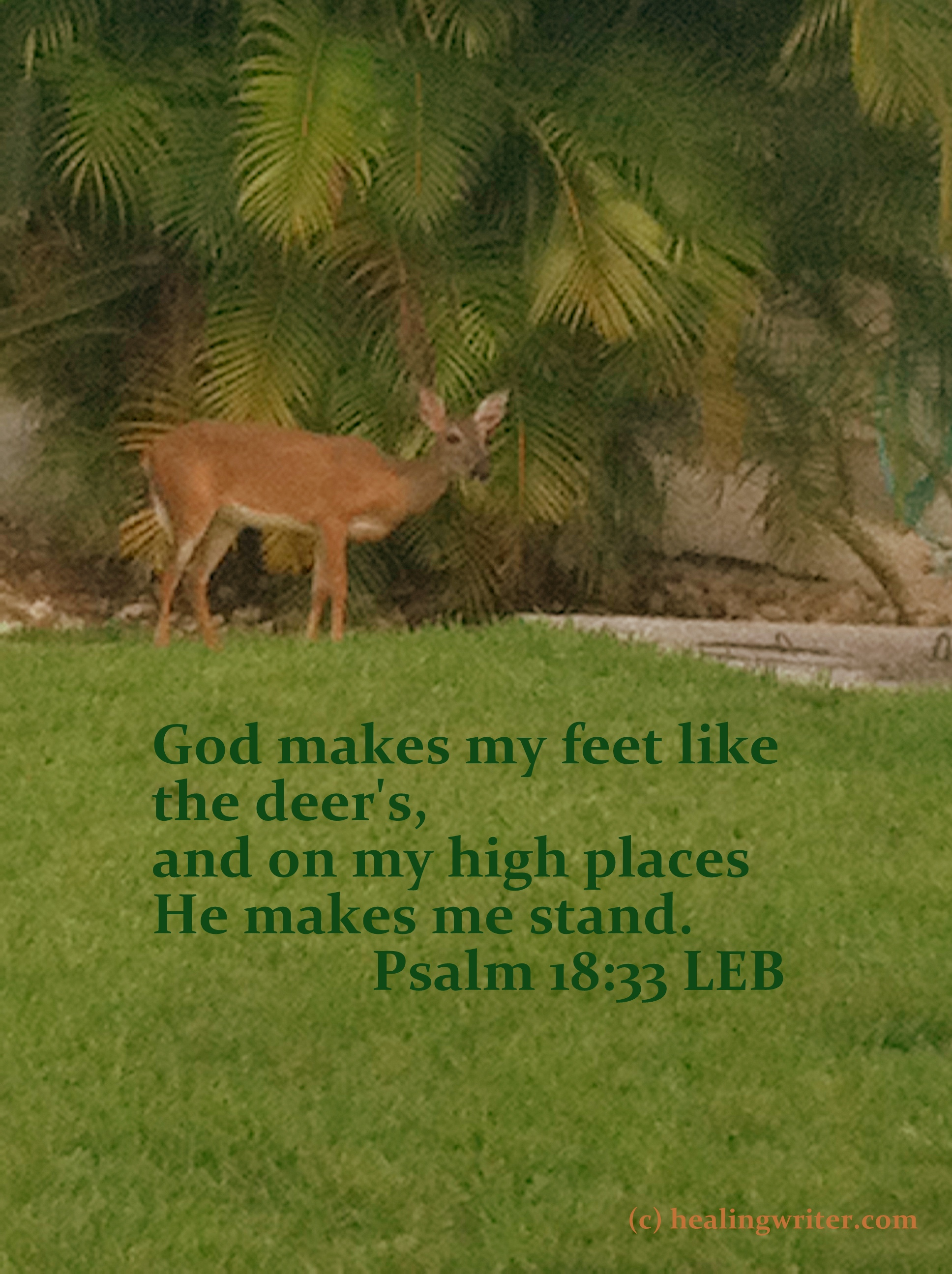 Deer feet Ps18-33