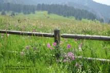 Wildflowers CO