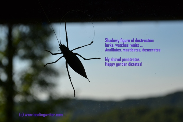 Bug poem