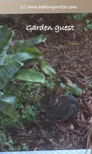 Bunny Garden guest