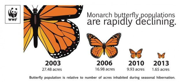 monarch infographic