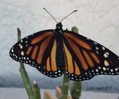 monarch 102717 HW