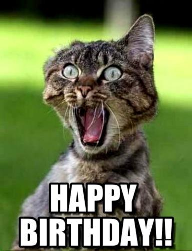 cat birthday-meme-1